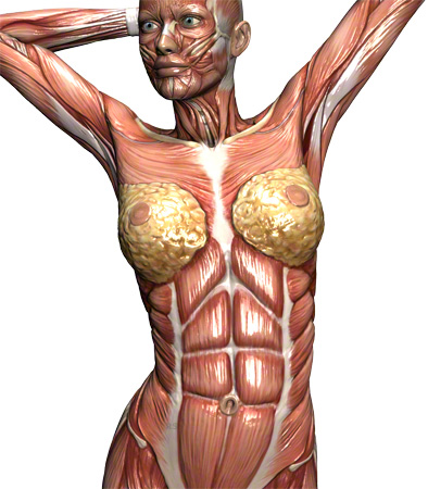 Bauchmuskulatur nach der Geburt - Die Familienwiege